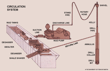 The circulation system